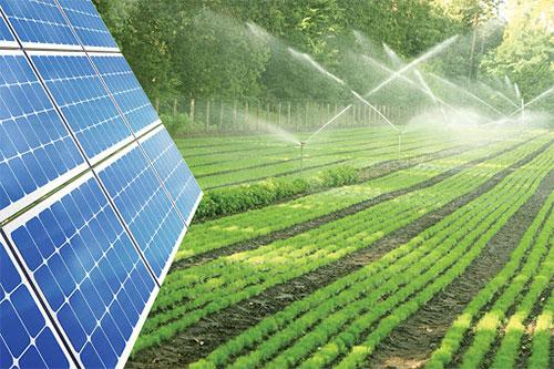 Hệ thống tưới tiêu sử dụng năng lượng mặt trời