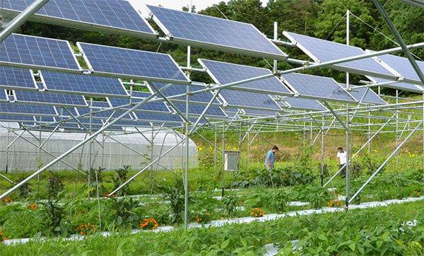 Năng lượng mặt trời kết hợp nông nghiệp