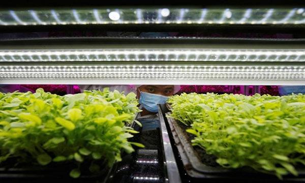 Ánh sáng led tiết kiệm và tốt cho cây trồng